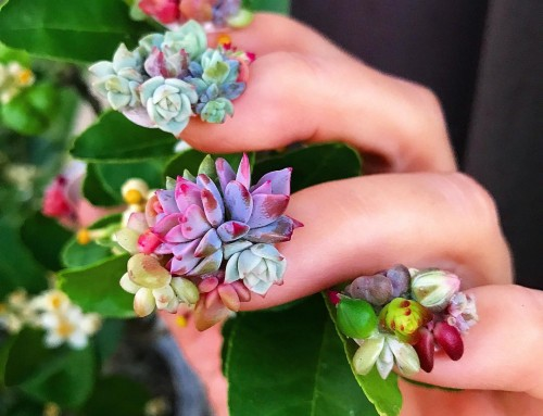 Groene vingers met Succulent Nails